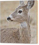 White Tail Deer Profile Wood Print