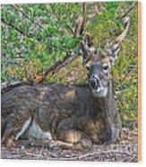 Deer Relaxing Wood Print