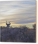 Deer Ridge - Sunset Buck Wood Print