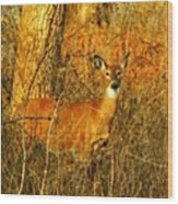 Deer Spotted In A Golden Glowing Field  Wood Print