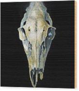 Deer Skull With Aura Wood Print