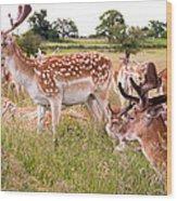 Deer Standing Up Wood Print
