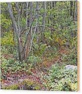 Deer Trail Early Autumn Pocono Mountains Pennsylvania Wood Print