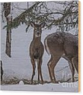 Deer With A Leg Up Wood Print