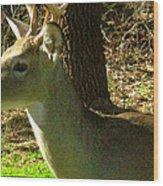 Deer4 2009 Wood Print