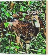 Deer's Green Day Wood Print