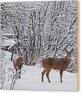 Deers In Winter Wood Print