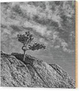 Defiant II Wood Print