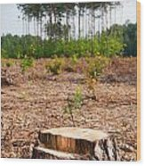 Woods Logging One Stump After Deforestation  Wood Print