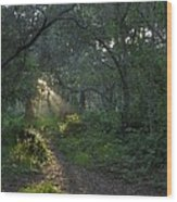Del Monte Forest Pacific Grove Ca Wood Print by Elery Oxford