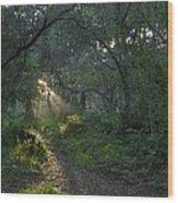 Del Monte Forest Pacific Grove Ca Wood Print