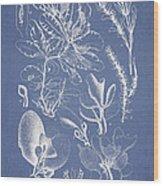 Delesseria Middendorfii Wood Print by Aged Pixel