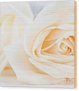 Delicate Beige Roses Wood Print