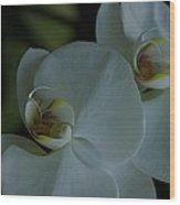 Delicate Bowl Wood Print