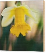 Delicate Daffodil Wood Print