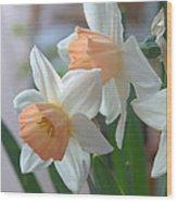 Delicate Daffodils  Wood Print