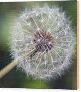Delicate Dandelion Wood Print