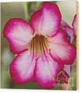 Delicate Desert Rose Wood Print
