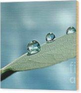 Delicate Drops Wood Print