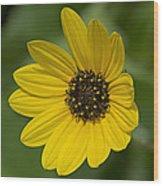 Delicate Flower Wood Print