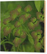 Delicate Green Wood Print