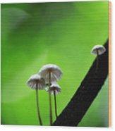 Delicate Mushrooms Wood Print
