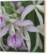 Delicate Orchid Blossoms Wood Print