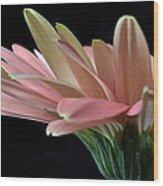 Delicate Petals. Wood Print