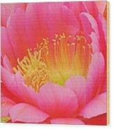 Delicate Pink Cactus Flower Wood Print