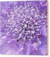Delicate Purple Wood Print