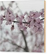 Delicate Spring Wood Print