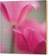 Delicate Tulip Curves Wood Print
