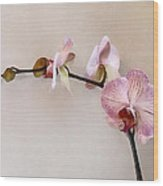 Delicate Pink Phalaenopsis Orchids Wood Print
