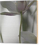 Delicate Wood Anemone Wood Print