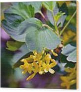 Delicate Yellow Flowers Wood Print