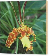 Delicate Yellow Spider Orchid Wood Print