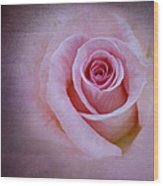 Delicately Pink Wood Print