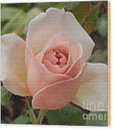 Delicately Pink Wood Print by Margaret McDermott