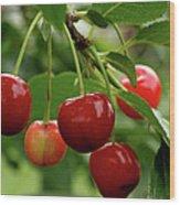 Delicious Cherries Wood Print by Sandy Keeton