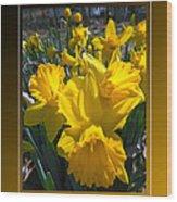 Delightful Daffodils Wood Print