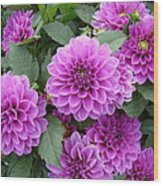 Delightful Dahlias Wood Print