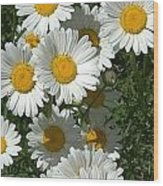 Delightful Daisies Wood Print