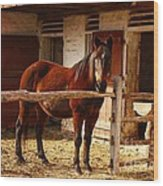 Delightful Horse Wood Print