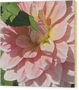 Delightful Smile Dahlia Flower Wood Print