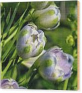 Delphinium Buds Blooming Wood Print
