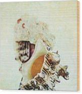 Delphinula Sea Shell Wood Print