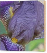 Demure Iris Wood Print