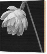Demure Lotus Wood Print
