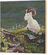 Denali Dall Sheep Wood Print