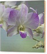 Dendrobium  6398 Wood Print